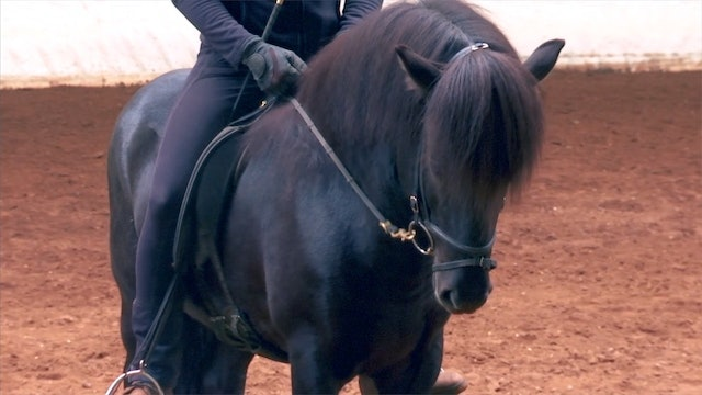The stallion and the rider - part 4