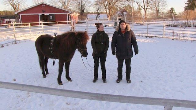 Del 1: Arbete med den självsäkra hästen.