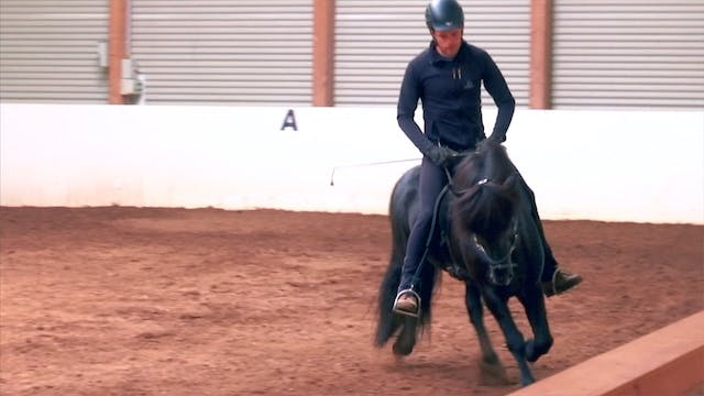 She stallion and the rider - part 1