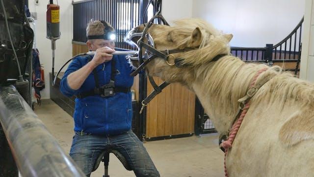 4. Hur väljer jag hästtandläkare?