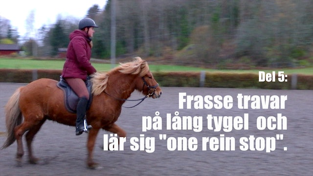 10 nov -17: Frasse travar på lös tygel