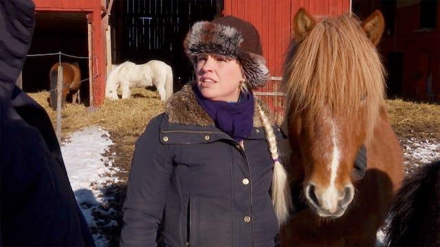 Drömmen om en egen hästgård.
