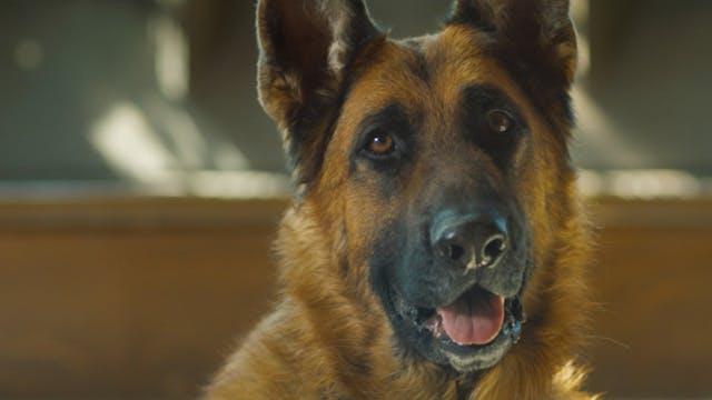 Episode 2 - Rocky, German Shepherd
