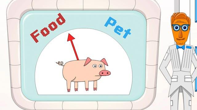 Episode 13 - Pets