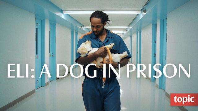 Eli: A Dog in Prison