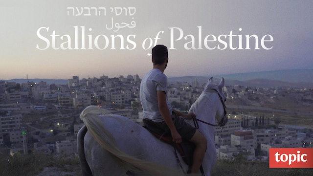 Stallions of Palestine