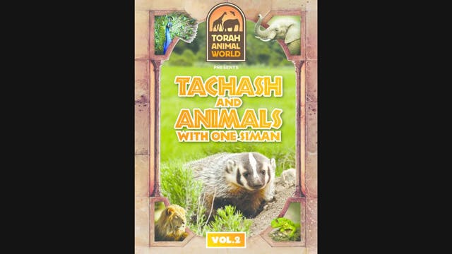 Tachash and Animals with one Siman Vol-2