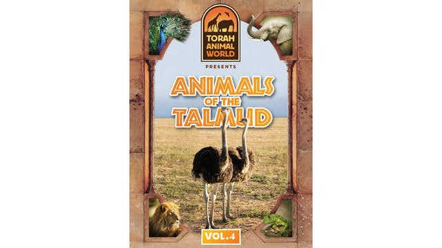 Animals of the Talmud Vol. 4
