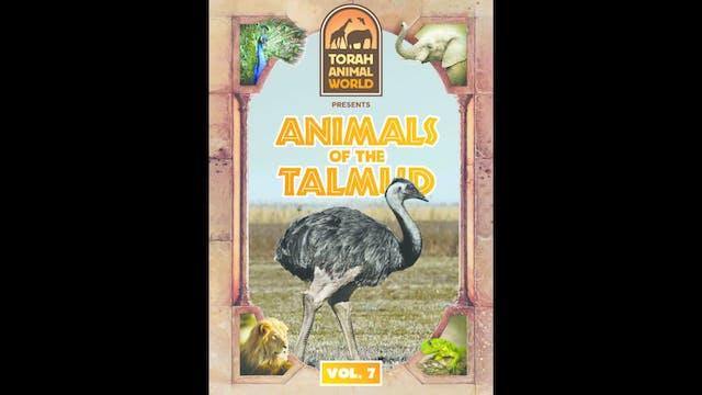 Animals of the Talmud Vol. 7