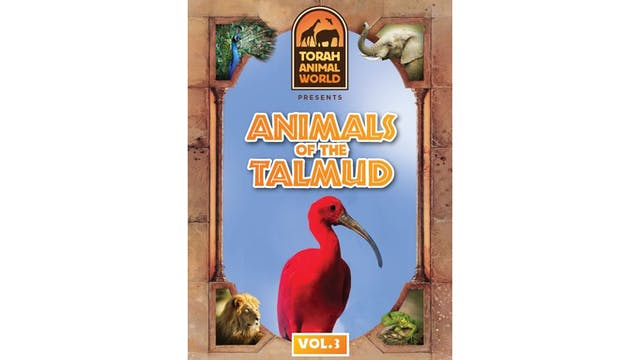 Animals of the Talmud Vol. 3