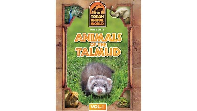 Animals of the Talmud Vol. 1