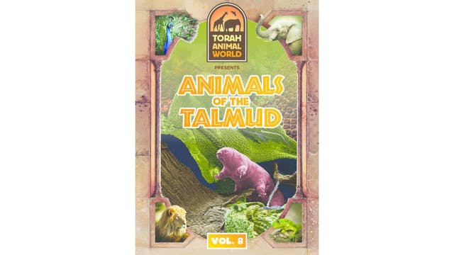 Animals of the Talmud Vol. 8