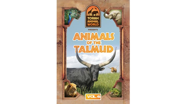 Animals of the Talmud Vol. 6