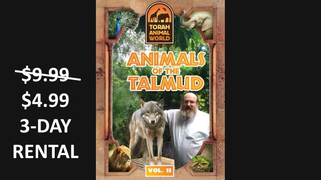 Animals of the Talmud Vol. 13