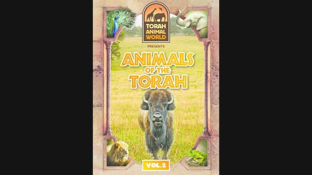 Animals Of The Torah Vol. 2