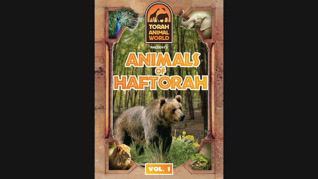 Animals of Haftorah