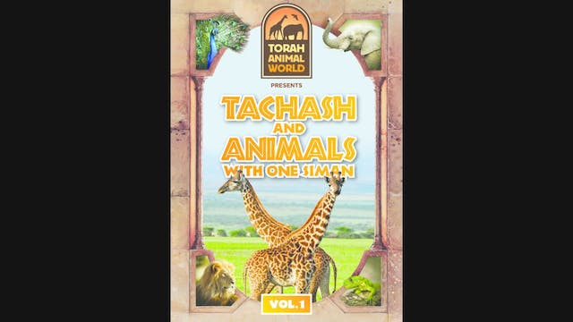 Tachash and Animals with one Siman Vol-1