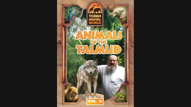 Animals of the Talmud Vol-13