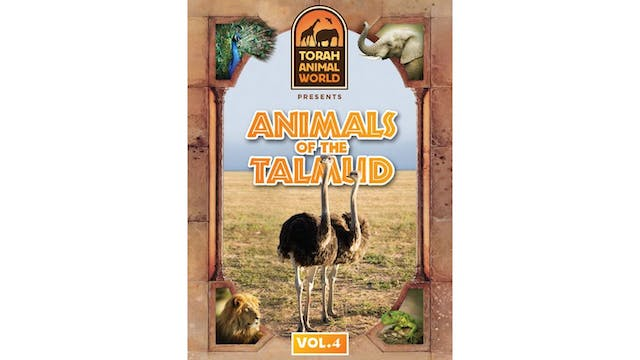 Animals of the Talmud Vol .4