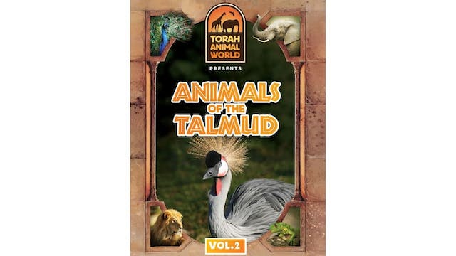 Animals of the Talmud Vol. 2