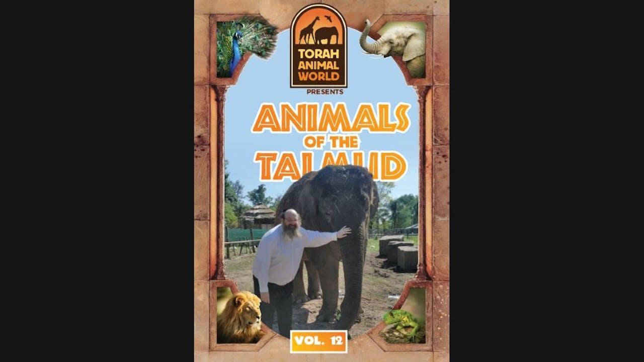 Animals of the Talmud Vol. 12