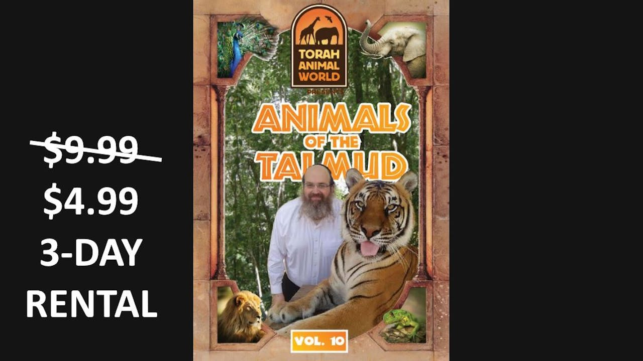 Animals of the Talmud Vol. 10