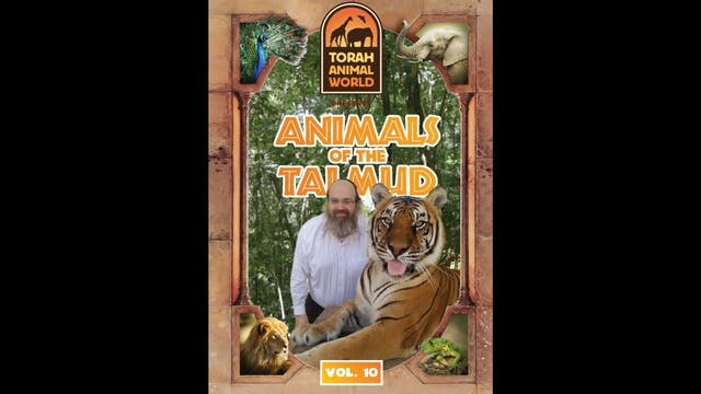 Animals of the Talmud Vol. 10