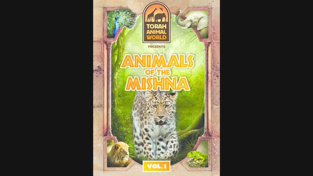Animals of the Mishna Vol. 1 (ENGLISH)