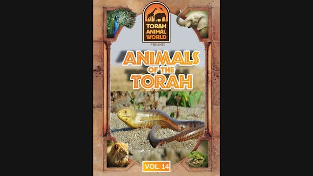 Animals of the Talmud Vol-14