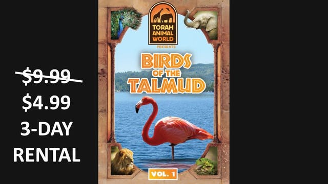 Birds of the Talmud