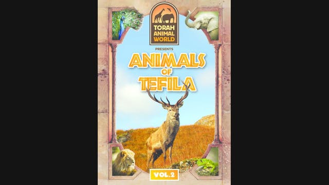 Animals of Tefila Vol. 2