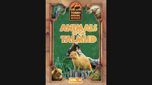 Animals of the Talmud Vol. 11
