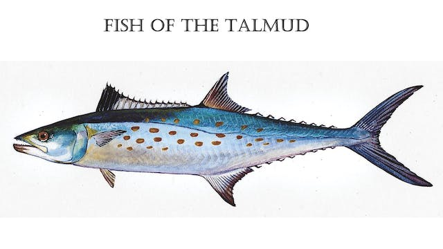 Fish of The Talmud