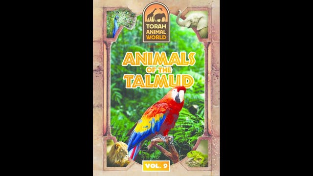 Animals of the Talmud Vol. 9