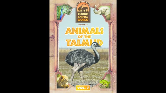 Animals of the Talmud Vol. 7