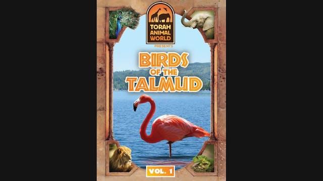 Birds of the Talmud