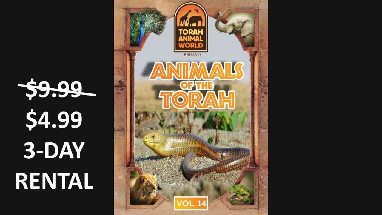 Animals of the Talmud Vol. 14
