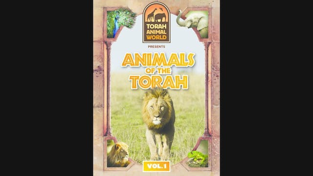 Animals of The Torah Vol. 1