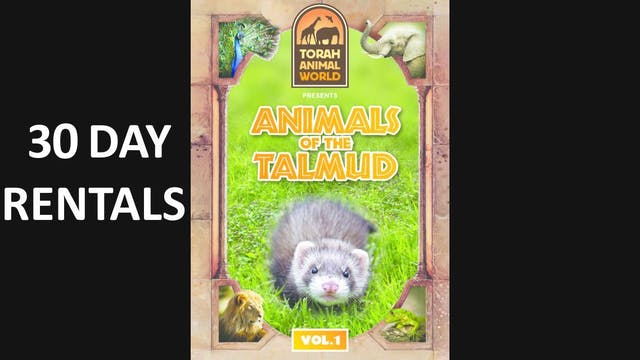 Animals of the Talmud Vol. 1