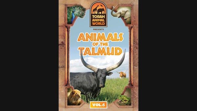Animals of the Talmud Vol. 6