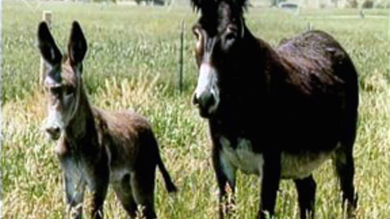 Episode 17 - Keys to Training the Donkey I