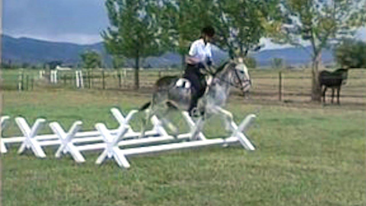 Episode 24 - Saddle Training the Donkey, Part II
