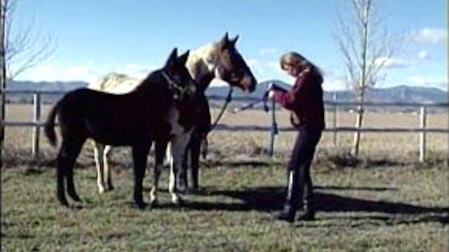 Episode 02 - Foal Training