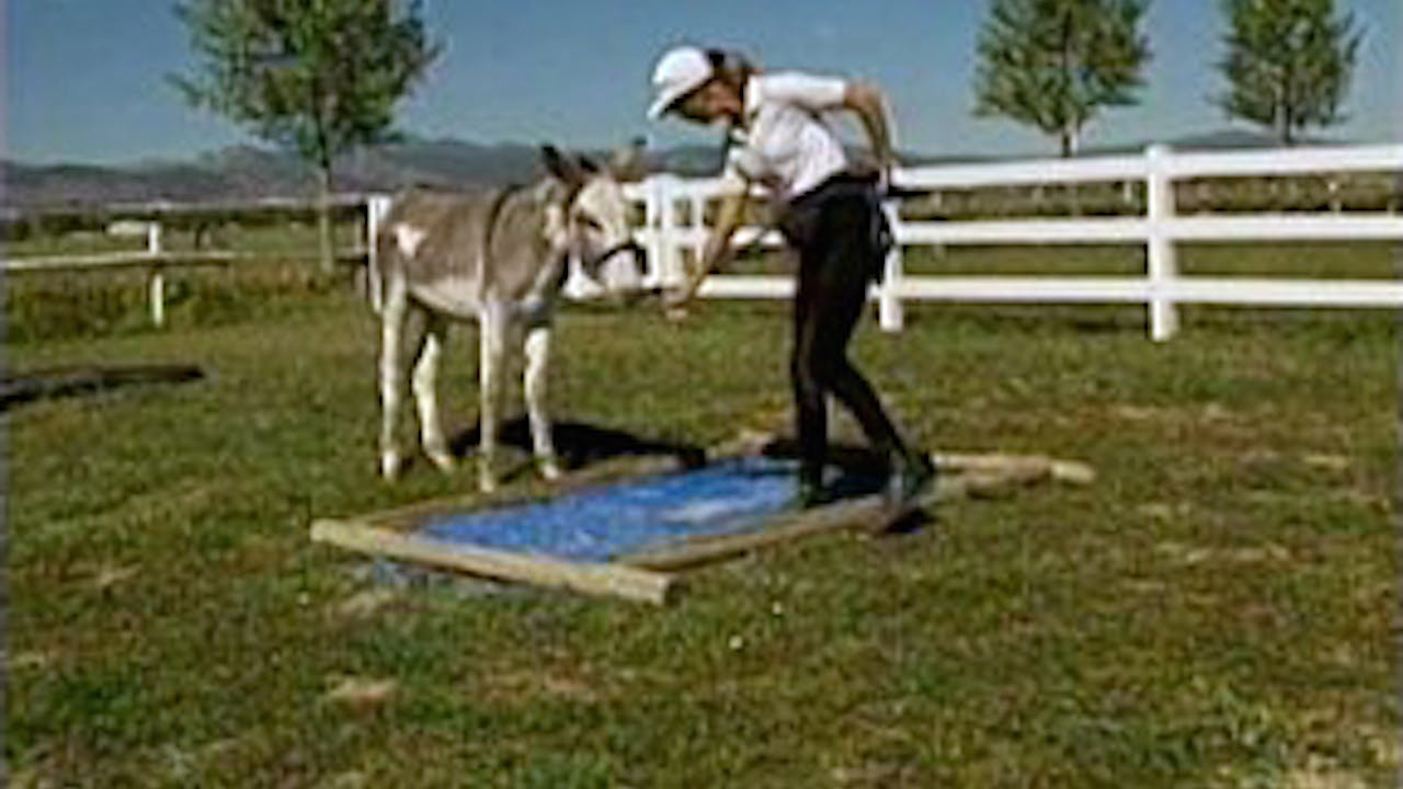 Episode 18 - Keys to Training the Donkey II