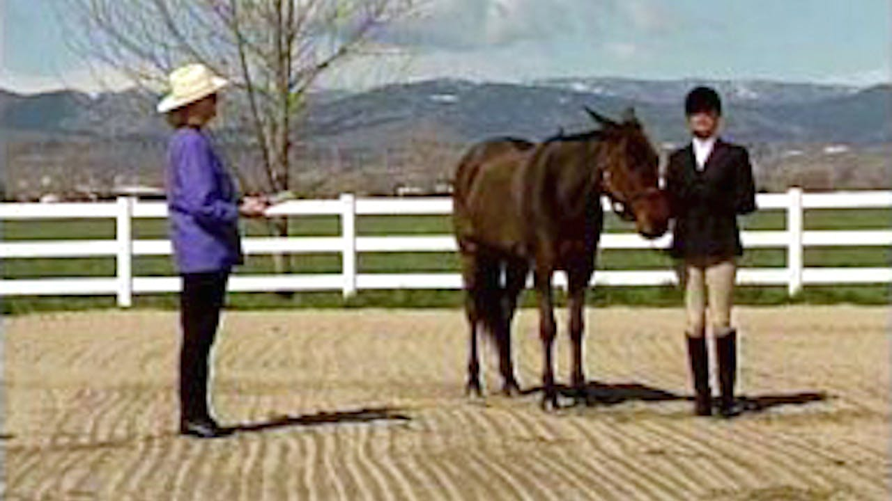 Episode 03 - Foal Training: Showmanship