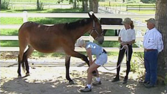 Episode 29 - Massage for Your Equine