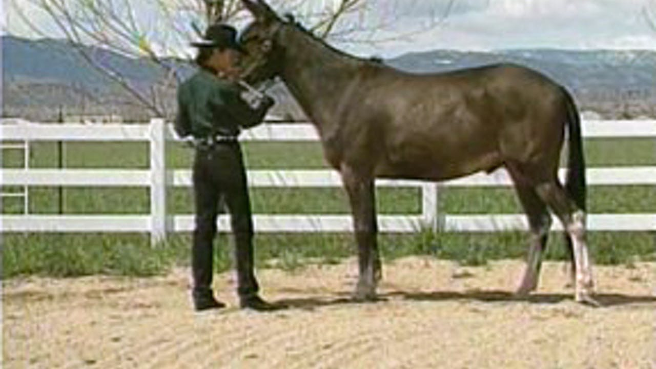 Episode 15 - Management, Fitting & Grooming: Advanced Showmanship