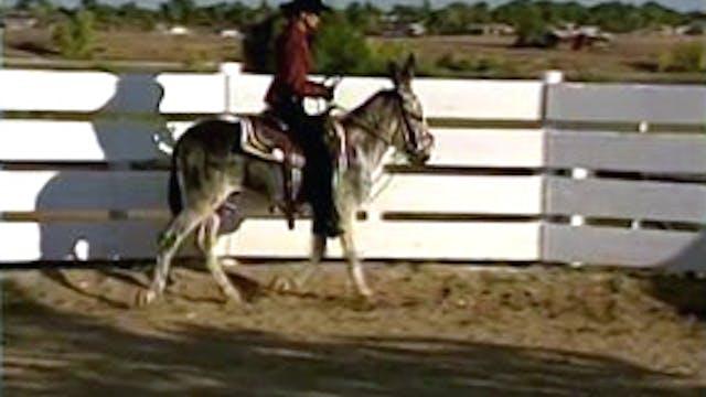 Episode 23 - Saddle Training the Donkey, Part I