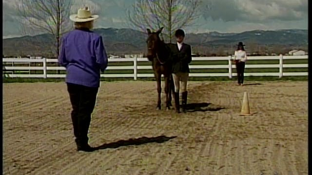 Foal Training: Showmanship