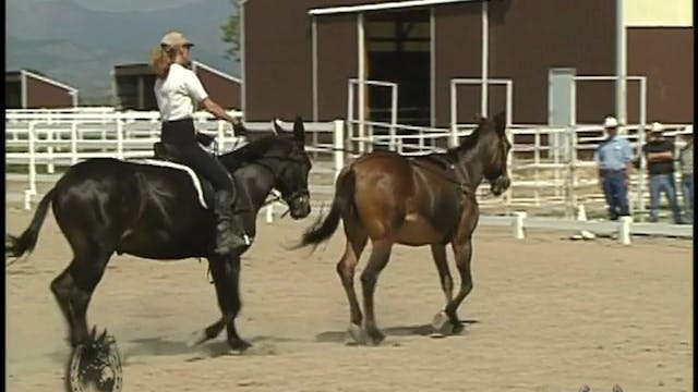 Evaluating Your Equine's Athletic Potential